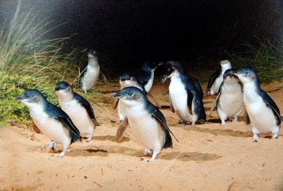 happy-penguins-full.jpg
