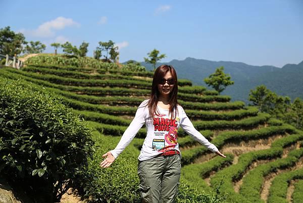 石碇八卦茶園2012.07.08 170.JPG