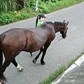 附近馬場的馬出來散步了!!