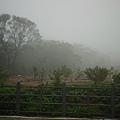 6_早上還好天氣的...現在下雨霧濛濛了.jpg