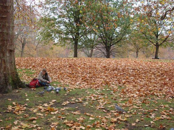 一地落葉美絶的 St. James' Park