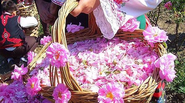 cesta-rosas-festival-rosa