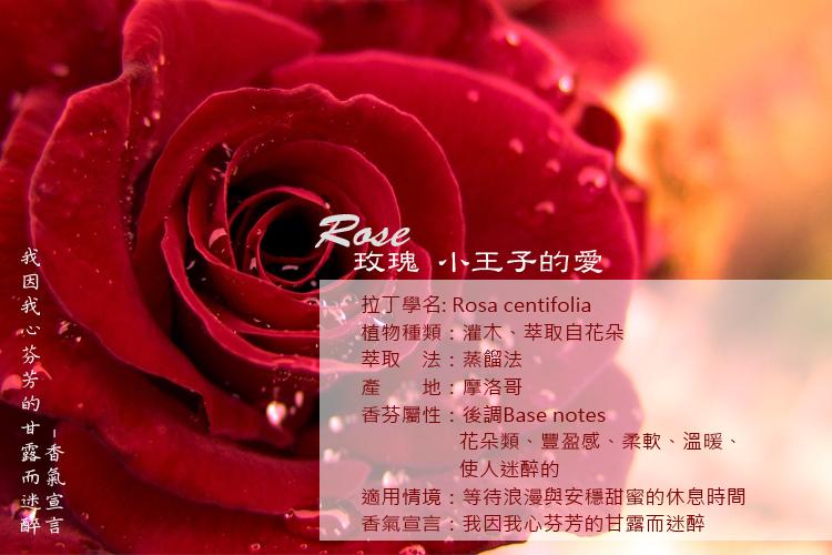 rose-1A.jpg
