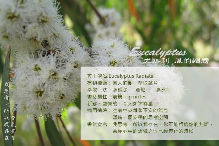 Eucalyptu-2A.jpg