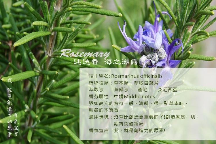 Rosmarinus2A.jpg