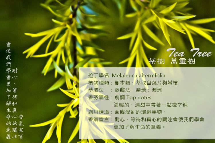 tea-tree-2A.jpg