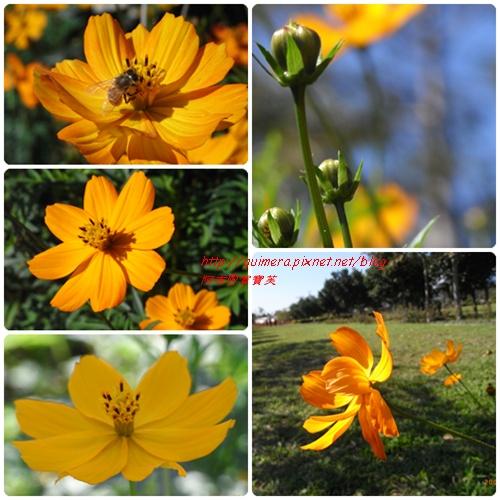 知卡宣森林公園-花蓮