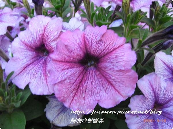 Day15──花