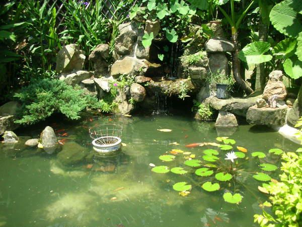 華山小木屋水塘1