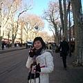 Aix-林蔭大道,但因為是冬天所以樹都枯了.JPG