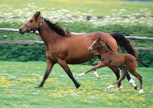 horse-horses-31429151-1600-1200