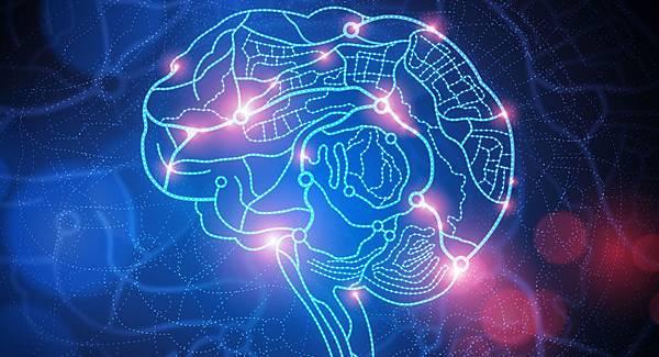 brain_main1