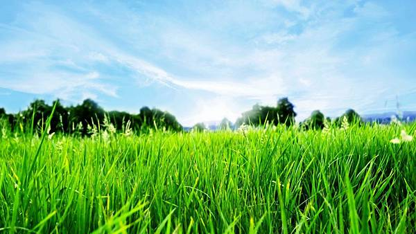 Awesome-Grass-Field-Wallpaper-Image-Download