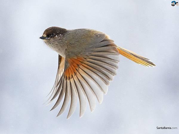 birds-120a