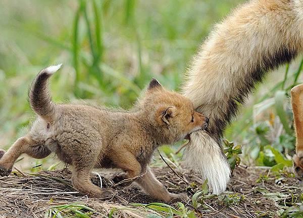 Amazing-Animal-Parents1