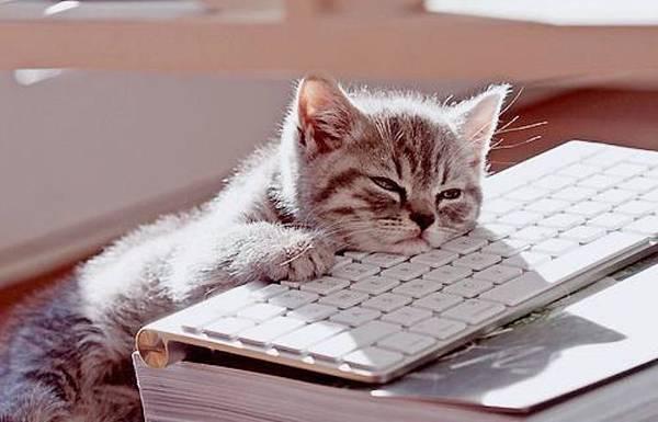bored-cat_Fotor