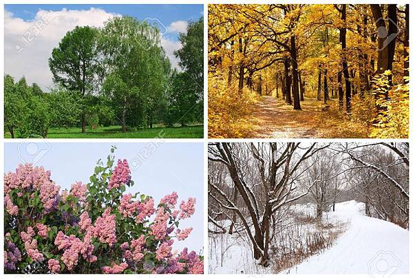 17643034-four-seasons-spring-summer-autumn-winter-trees-collage-with-white-borders-Stock-Photo
