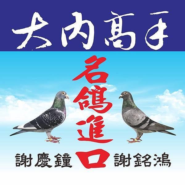 台南大內高手-鴿