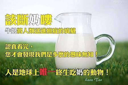 该断奶了,牛奶將人類送進癌症的墳墓