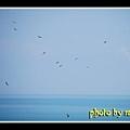 Tanjung Tuan ~ 观鸟记