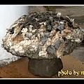 迪哎歪~蘑菇