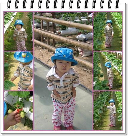 2y1m~草莓园