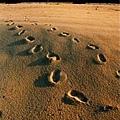 看图说画(2) : 足迹