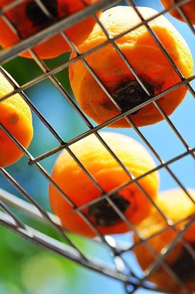 味衛佳柿餅觀光農場4.jpg