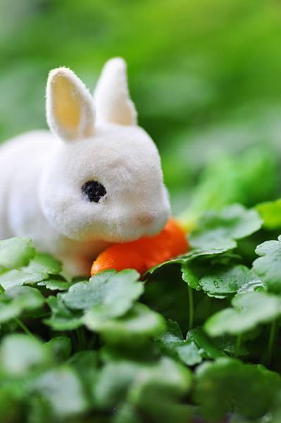 兔子.jpg