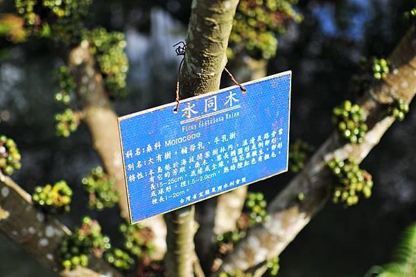 柯林湧泉圳-花草5