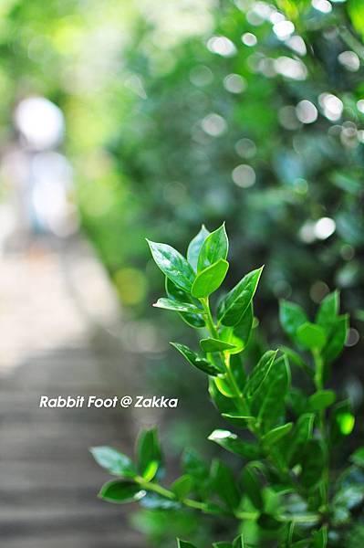 柯林湧泉圳-花草6