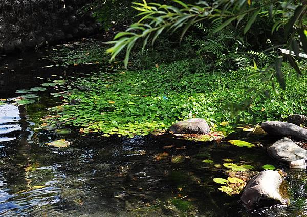 柯林湧泉溪水