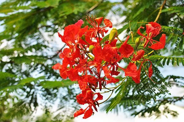 柯林湧泉花朵2