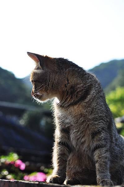 侯硐貓村8