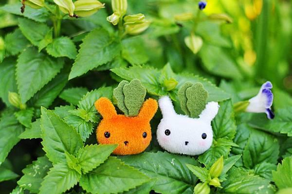Bucute-蘿蔔兔.jpg