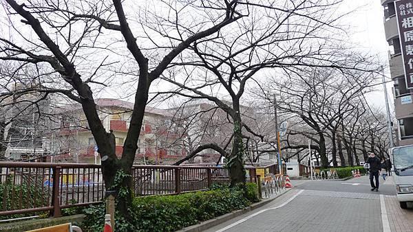 中目黑街景5.jpg
