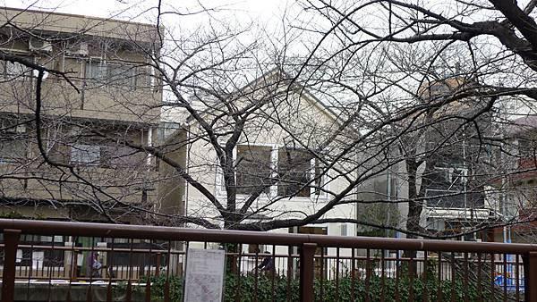 中目黑街景6.jpg