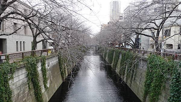 中目黑街景8.jpg