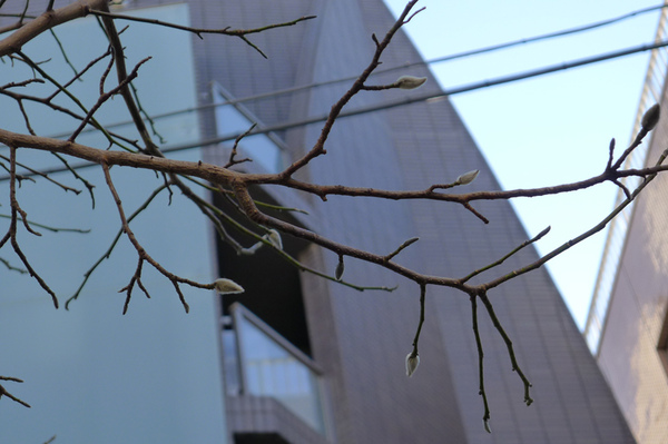 20110131自由之丘16.jpg