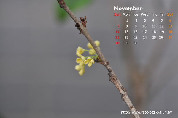 2010-11-flower2.jpg