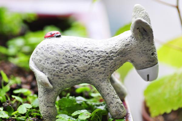 園藝-驢子3.jpg
