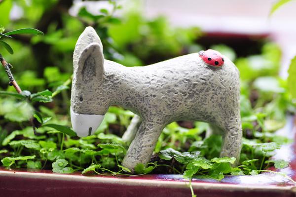 園藝-驢子1.jpg