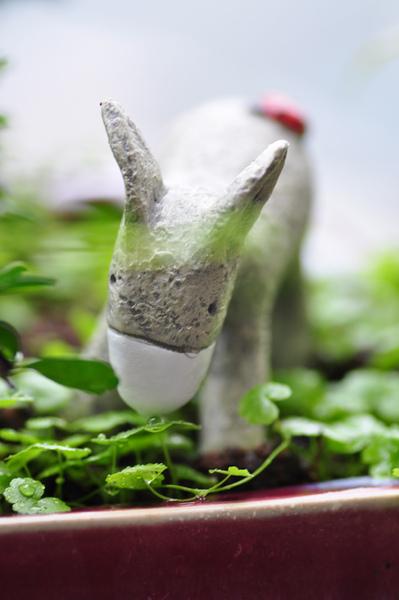 園藝-驢子2.jpg