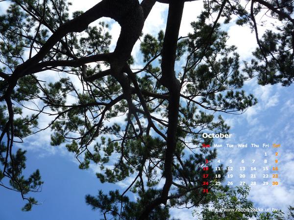 2010-10-tree.jpg