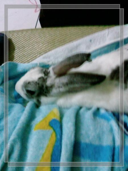 咪咪好舒服喔(2007.11.19)