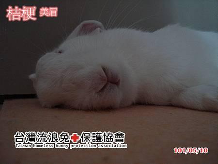 1010510˙桔梗1(改)