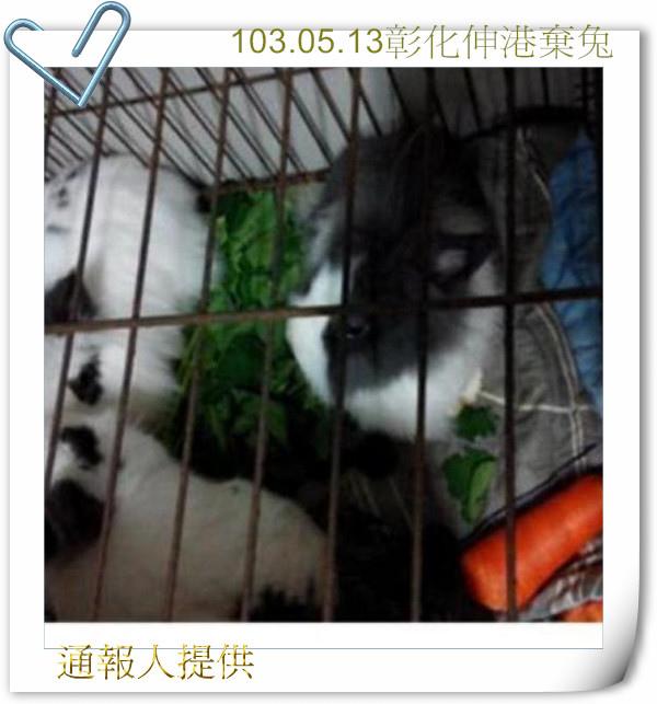 彰化伸港棄兔.JPG