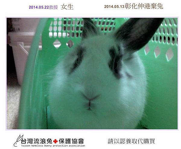 PhotoCap_彰化伸港棄兔2