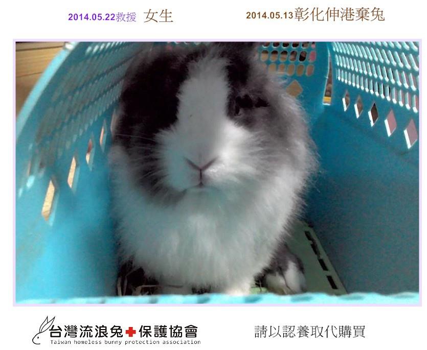 PhotoCap_彰化伸港棄兔1
