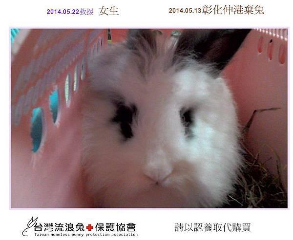 PhotoCap_彰化伸港棄兔3.jpg
